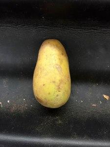 B-Size-Gold-Potato