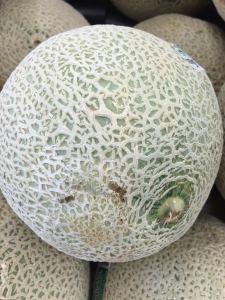 elopingmelon