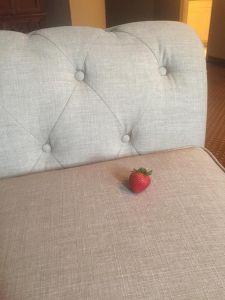 strawberrycouch