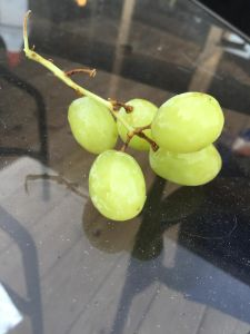 fivegrapes